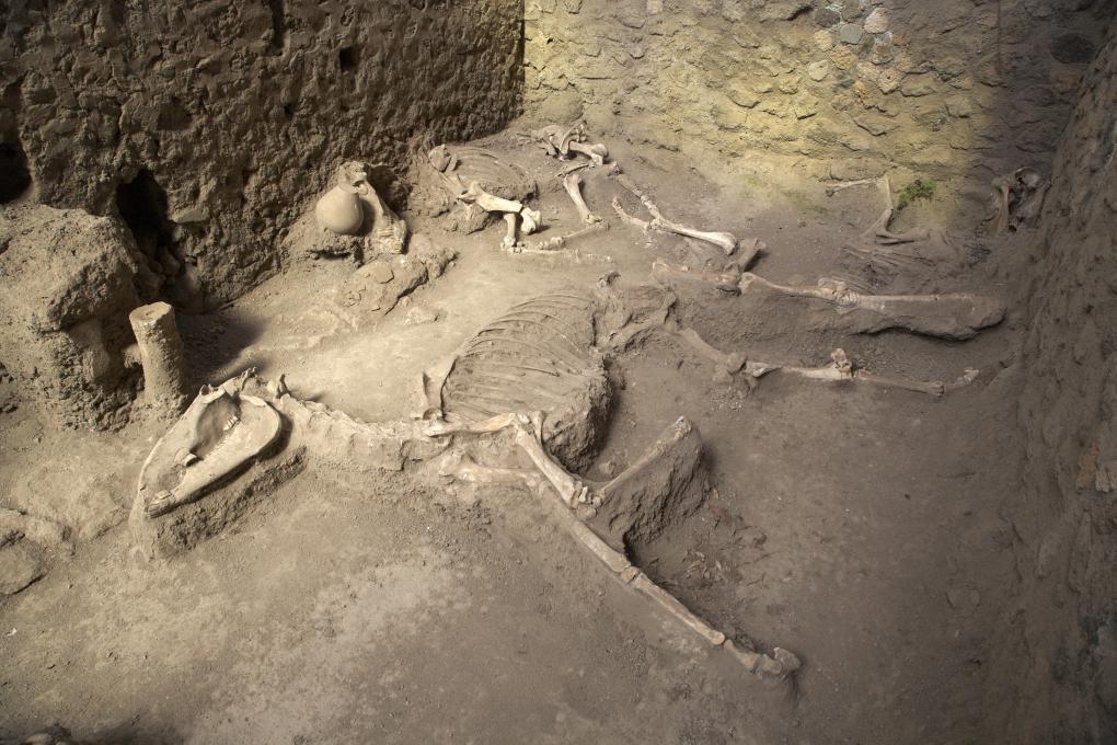 Squelettes de chevaux dans la boulangerie de Pompéi